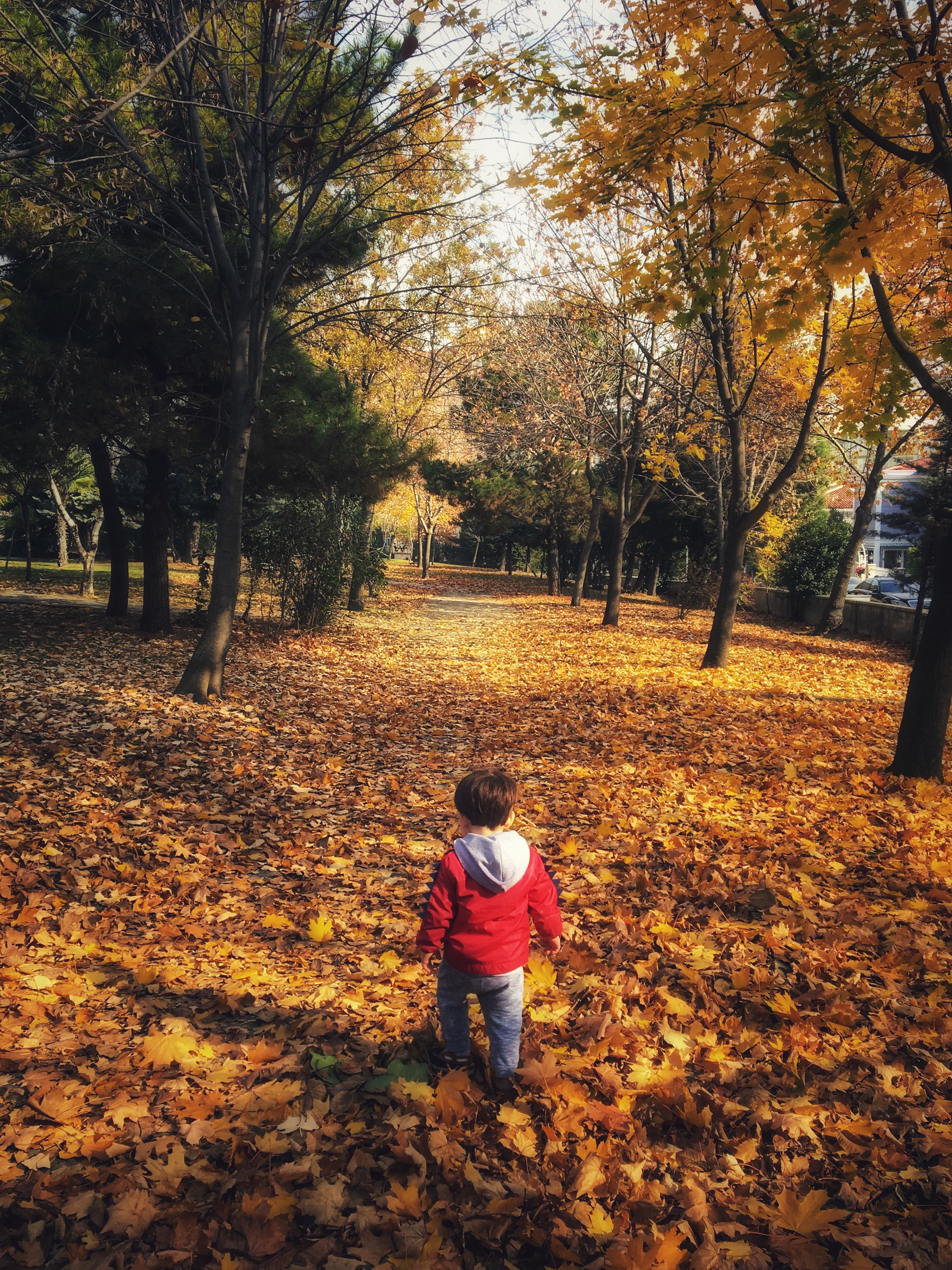 Harika bir doğa gezisi:Atatürk Arboretumu
